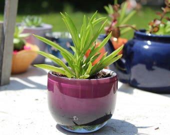 Mystic Purple - Glass Succulent Planter