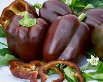 Pepper Chocolate Beauty 25+ seeds - heirloom seeds - vegetable seeds - garden seeds - pepper seeds - sweet pepper seeds - bell pepper seeds