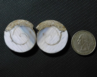 pair of fossil ammonite cabochons 78 cts (31x29) mm