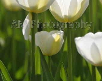 flower white green digital file printable photografy home decor