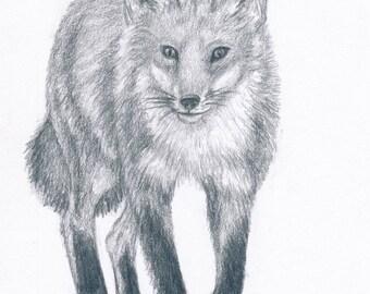 Fox (print)