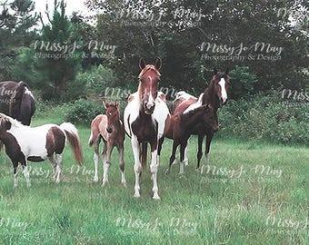 May Farm Horses Digital Background