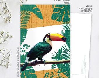 Decorative Toucan Jungle card postcard illustration