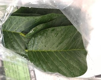 25 Organic High Quality Guava Leaves From CALIFORNIA