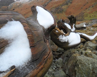 Snow on wooden tree trunk. Eagle Crag, English Lake District.