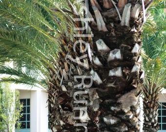 Palm Trees on 30A