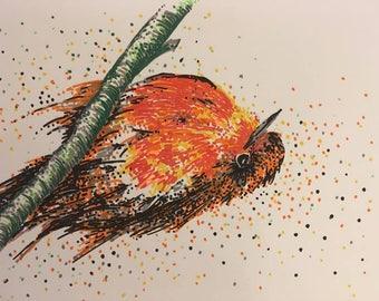 Winter Robin drawing