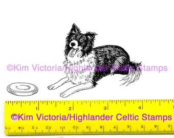 Border Collie lying down Unmounted Rubber Stamp