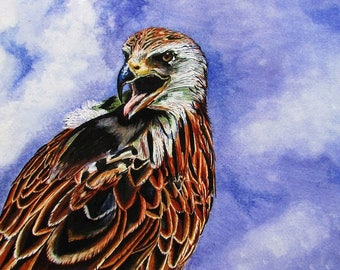 A4 Giclée Print entitled 'The Assertive Red Kite' from an original watercolour painting by artist Martin Romanovsky
