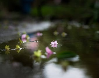 Hurricane Harvey, Houston Texas, Macro Photography, Reflection Photography, Water Photography, Light Photography, Fine Art Photography,