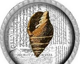 Cabochon pendant - beautiful shell (508)
