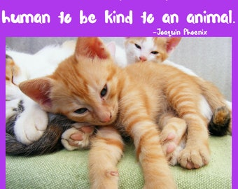 Digital Art Print| Downloadable quote It takes nothing away from a human to be kind to an animal. Joaquin Phoenix Quote