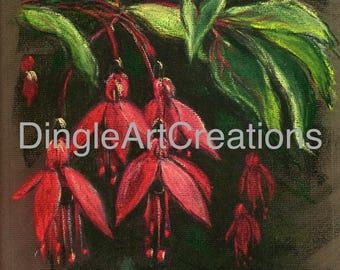 Dingle Fuchsia 1