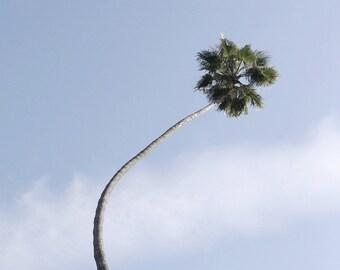 Palm Tree, Palm Tree Printable Art, Palm Trees, Wall Art, Printable, Minimal Photography, City Art, Home Decor, Beach, Archival Print