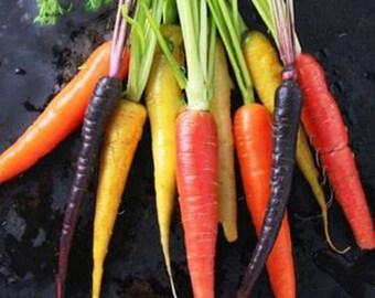 200 Pcs Rainbow Carrot Seeds Vegetable seeds