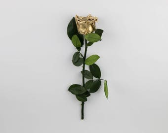 Mettalic Gold Long Stem Roses, Forever Roses,Real Preserved Gold Roses,Eternity roses that lasts a year,Beauty and the beast rose,Gold Rose