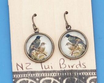 New Zealand Tui birds, vintage art print, Earrings, glass dome art, niobium hypo-allergenic