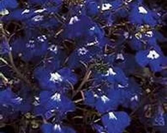 Lobelia- Sapphire- 200 Seeds