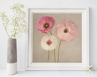 Poppy Flower Photography Print, Girls Room, Wall Decor, Flower Wall Art, Pink Poppies, Floral, Home Decor, Fine Art Photography Print