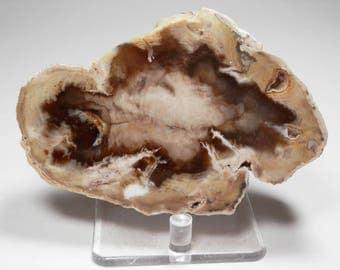 PD-263  Opal Agate Petrified Wood Polished Display Specimen