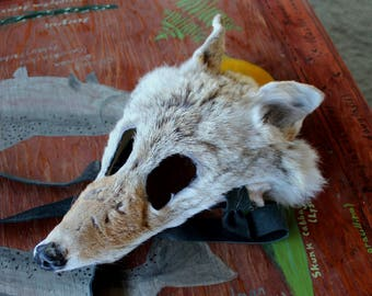 Real eco-friendly wild coyote fur mask - shaped and glasses friendly - for ritual, dance, costume and more