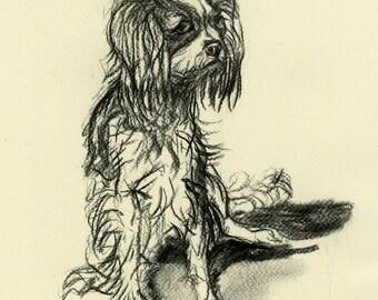 Original Cavalier Charcoal Sketch