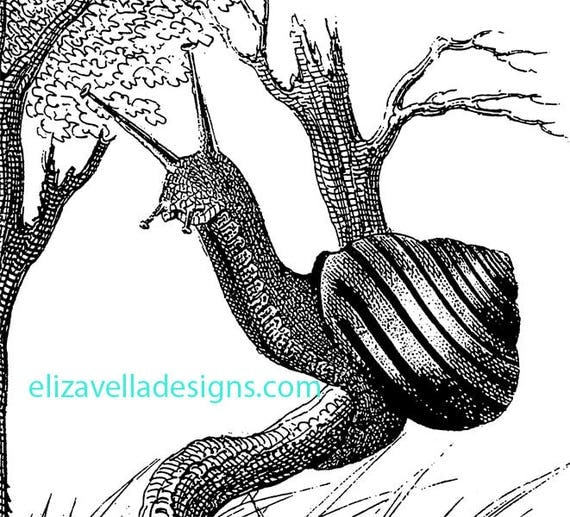 snail bug insect clipart png clip art printable graphics art digital image download digital stamp black and white artwork commercial use