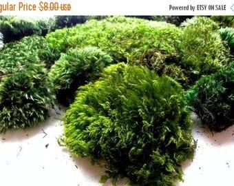 Save25% Mood Moss Preserved-Quart Bag 2 Oz-Floral supplies-Wedding Supplies-Fairy Garden Parties