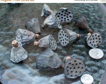 Save25% Lotus Pods-2 sizes available-Tiny or Small lotus pods-Botanical-Miniature pods-Bag of 12 pods