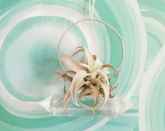 Little Air Plant Crystal Hanging Planter Swing, Dorm Or Studio Decor, Silver Wire Wrapped, Chiapensis,Treat Yourself