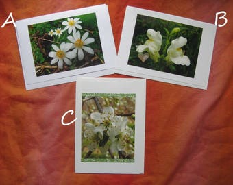 Flower Photo Card YOU CHOOSE ONE -  5 by 7 White Floral Nature Cards, Pick the 1 You Want or Buy All 3, Flowers Photography Pretty Bloodroot