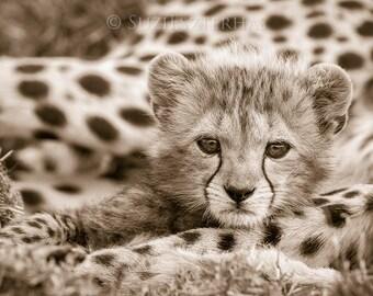 Animal nursery art prints, CUTE BABY ANIMALS, Set of 4 Sepia Photos, Elephant, Orangutan, Cheetah, Polar Bear, Safari Baby Shower, Zoo
