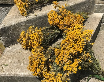 5 bunches of dried Tansy - dried flowers