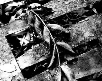 Garden Photography - Photographic Art Print - 5x7