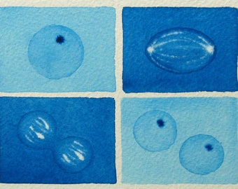 Blue Mini Mitosis  - original watercolor - cell cycle