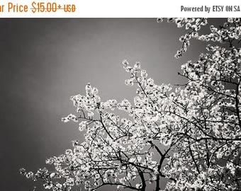 Black and While Photography: Joyful Fine Art Photography Flowering tree Branches Nature Photography, Tree Print, White flowers