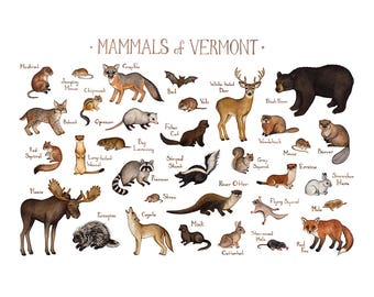 Vermont Mammals Field Guide Art Print  / Animals of Vermont / Watercolor Painting / Wall Art / Nature Print / Wildlife Poster