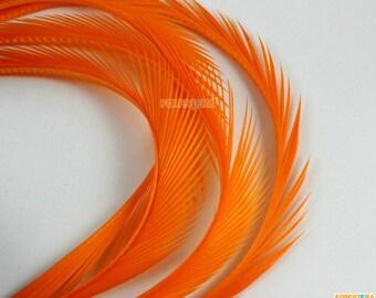 50 Pieces Orange Feather 10-16cm (YM435)