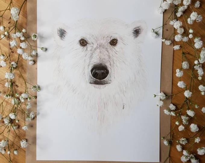 Ijsbeer kaart/ miniposter A5: 14,8 x 21 cm