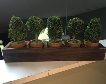 Planter Box with 5 Topiaries