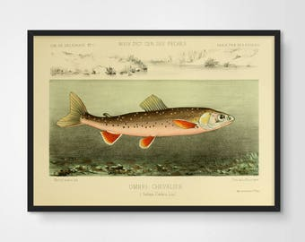 Fish illustration etsy for Koi larousse