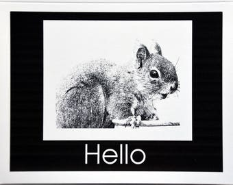 Drawings of Red Squirrels - Notecards