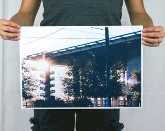 Sunset Cedars - Large Photography Print