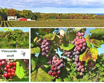 2018 Vineyard  Wall Calendar - each one hand crafted - Original photography - progression of the vines - all seasons