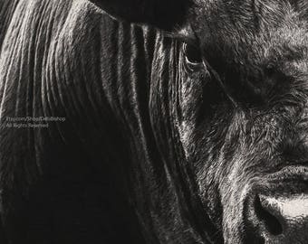 Big Black Angus Bull In Black And White Abstract Portrait -Canvas Gallery Wrap -Cow Wall Art -Farm & Ranch Art-Veterinarian Wall Decor