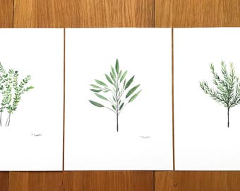 Herbs watercolour set of 3 (9 X 12 inches)botanical plants, herbs decor herbs thyme Rosemary and Sage original art 9 x 12 inches each