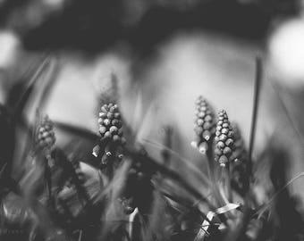 Black and White picture,Black and White photo,schwarz weiß fotografie,digital photography,printable,macro photo, picture,drucken foto,macro