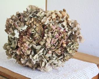 10 Dried Hydrangea flowers DIY craft bouquet , antique creamy , rustic bouquet, hortensien,  flores secas