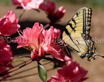 Photo Print - Pollination