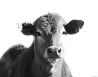 Printable Cow Art